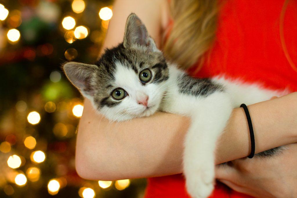 boutique pour éleveur félin pet sitter vendeur chat animalerie en ligne