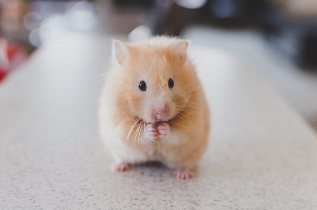 boutique hamster pour vendeur pet sitter éleveur animalerie en ligne