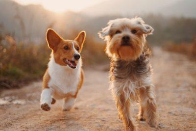 boutique pour éducateur canin pet sitter éleveur vendeur chien animalerie en ligne
