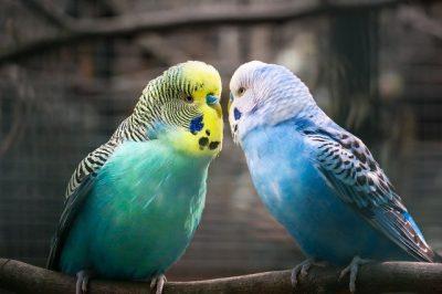 boutique pour oiseaux animalerie en ligne