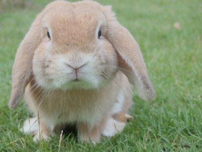 animalerie en ligne boutique accessoires aliments animaux