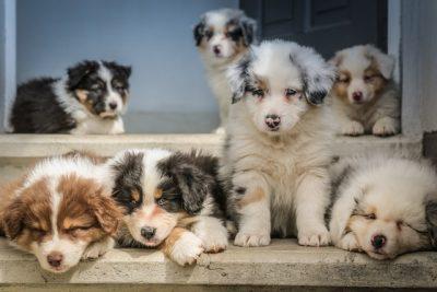 boutique pour éducateur éleveur canin pet sitter vendeur chien animalerie en ligne