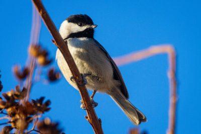 Animalerie en ligne / Boutique pour oiseaux de jardin / Faune sauvage urbaine