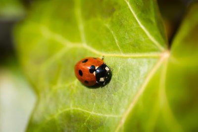 Animalerie en ligne / boutique pour insectes / faune sauvage urbaine