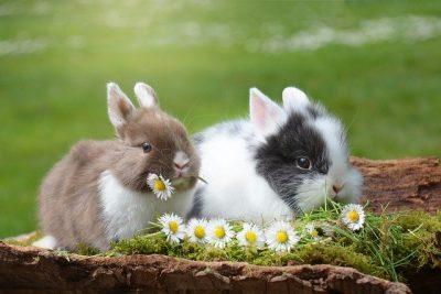 boutique lapin pet sitter vendeur éleveur animalerie en ligne